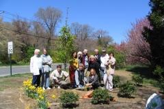 Flowering pear Planting