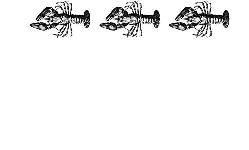 lobster banner